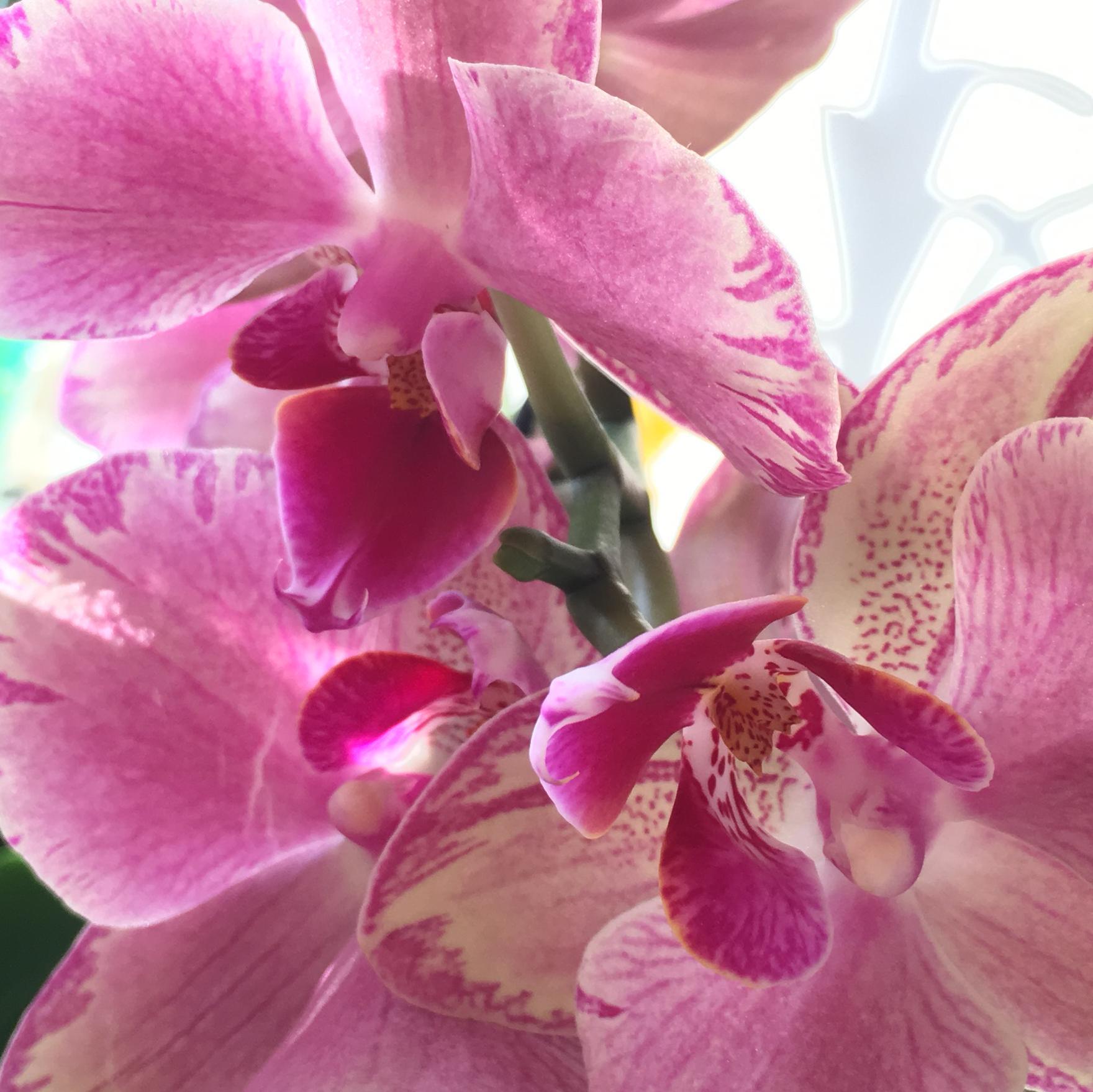 Orhid Love