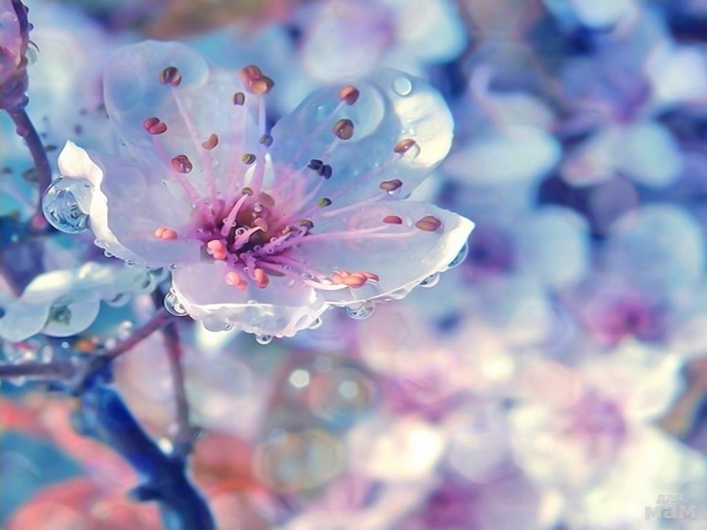 красивые открытки весна на аву свою карьеру она