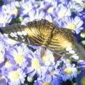 полет бабочки (Уютная кухня)